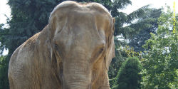 NO TO EUTHANASIA OF 2 ELEPHANTS - BABY AND NEPAL IN FRENCH ZOO