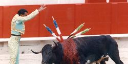 France- Stop Bullfighting Festival