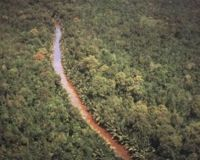 Save Indonesia's protected forest: Revoke Indonesian Goverment Regulation No. 2/2008