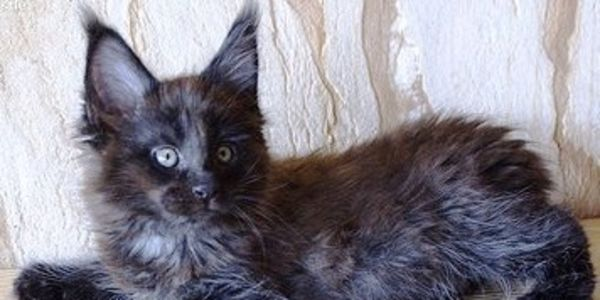 Find & Prosecute Person Who Mutilated Cat & Left On Porch Of Woman