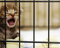 Washington University, Stop Torturing Cats!