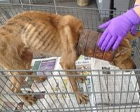 Ask the Ecuadorian government the elaboration of laws against animal abuse