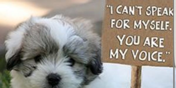 petition: STOP PUPPY MILLS