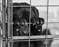 We demand investigations in EU States to ensure that animal welfare treaties are followed.