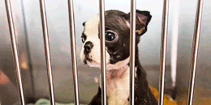 Ban the sale of Puppies and Kittens in Okotoks Pet     - petition