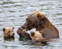 President Obama: Stop the Pebble Mine and Save Bristol Bay