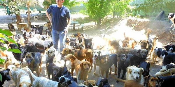 Update about 'Stop euthanasia of strays in Romania
