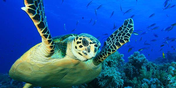 Help stop the turtles of Australia dying from coastal development