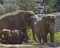 Send Elephants to a Sanctuary and Close L.A. Zoo