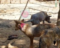 Calling for the Humane Treatment of Animals in Egypt's 7 Governmental Zoos