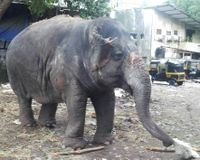 India- Rescue Laxmi, the