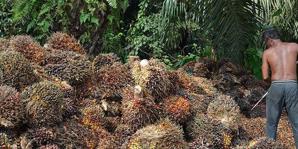 PepsiCo: Commit to Slavery-Free Palm Oil