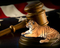 Thank Judge Caldwell for Protecting the Truckstop Tiger