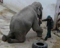 Help Romanian Zoo Elephant, Tania