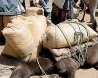 Stop cruelty against animals in Morocco