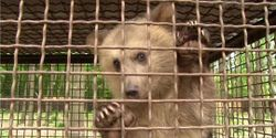 Urge Lutsk Zoo reunite Nastia bear cub with mum