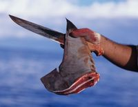 Thank Maryland for Banning the Shark Fin Trade