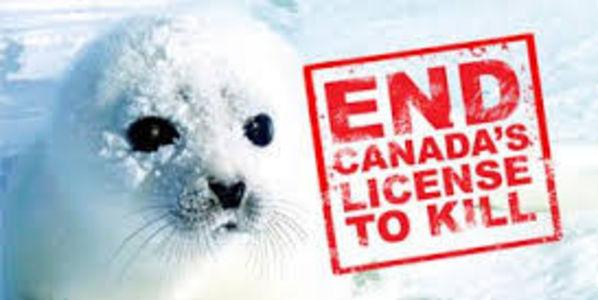 Résultats de recherche d'images pour «help end the canadian seal massacre»