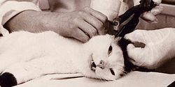 Appeal to Kitasato University to stop cruel tests on cats