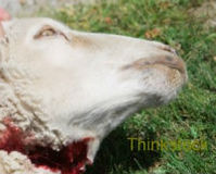 Stop the Coast Guard's Butchering of Live Goats