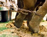 Circus Cruelty Campaign Target: Marshall, MN