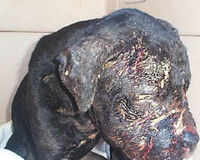 Accountability for dog fighting enablers