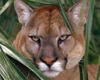 Urge Rick Scott to Help Florida Panthers