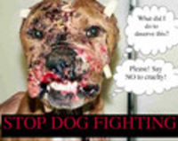 STOP GRUESOME DOG FIGHTS IN THE NAME OF