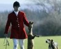 Ban Fox Hunting & Scent Trail Baiting, Period!!!