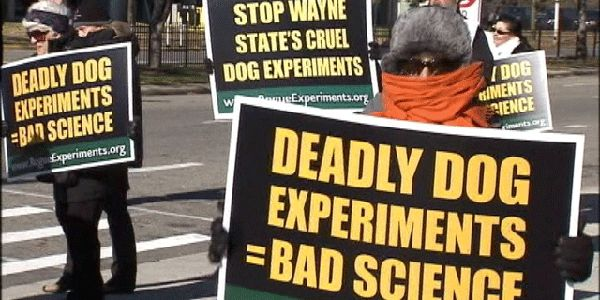 End medical experiments on dogs at Wayne State University in Michigan