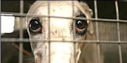 Close the Tucson Greyhound Park Now!