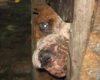 Demand a Revision of New Jersey Animal Cruelty Statutes