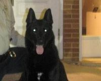 Justice for Napo, the Perry County, MS police dog who died due to his handler's negligence