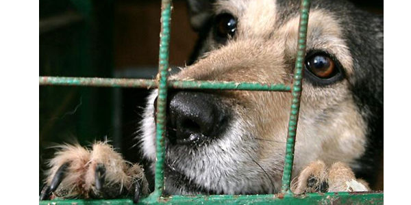 Tell Samoa- Don't Export Dog Meat!