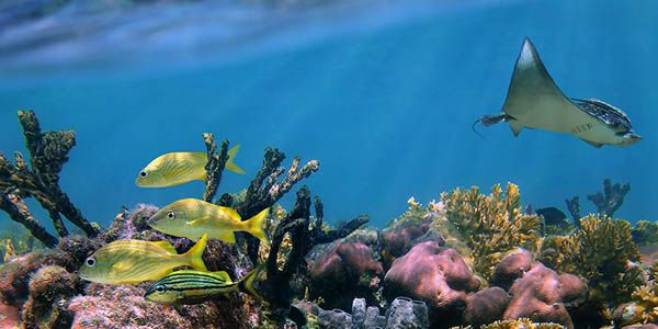 Protect the Great Barrier Reef. Give it a legal identity!