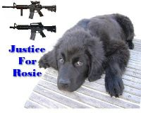 Rosie, The Newfoundland Shot By Police