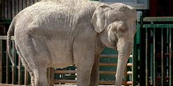 Expose Longleat for abuse of public donations for elephant Anne