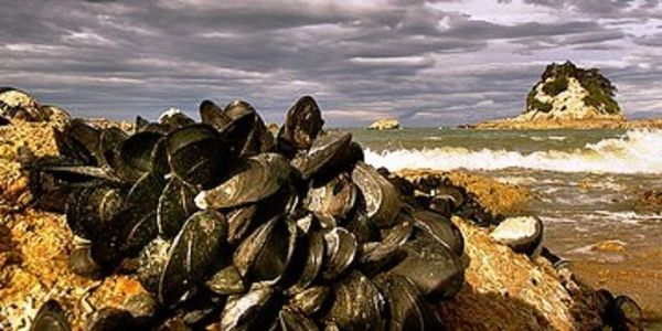 Urge the EPA To Take Action In Protecting Oceans & Shellfish Affected by Ocean Acidification!