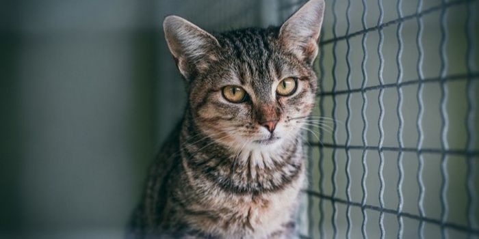 petition: Stop Animal Abusers From Getting Pets Through