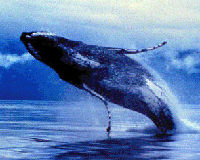 Stop Commercial Shipping From Killing Whales