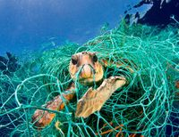 Ban Drift Nets in California