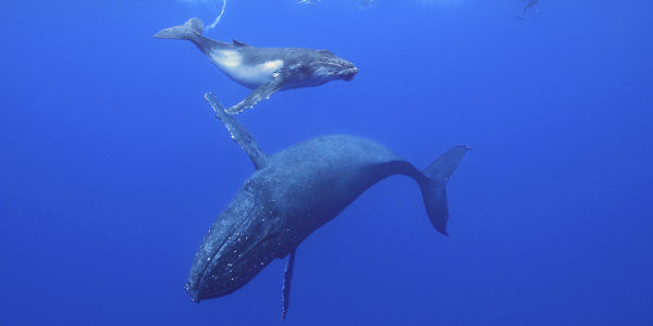 Help Save Marine Animals