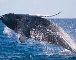 Protect Whales and Dolphins From Sound Bombs - The Petition Site
