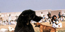Stop Bear Baiting in Pakistan