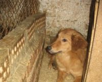 Stop slaughtering stray animals in Ukraine