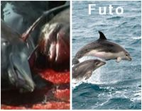 Please Sign to Stop the Cruel Dolphin Hunting in Futo!