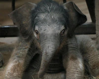 Stop Electrocution of Elephants in India