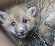 Save Wildlife in Need of Rescue and Rehabilitation (WINORR) from Being Shut Down