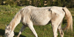 Stop Horse Slaughter in the U.S.!