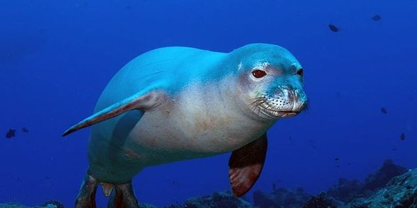 Help Keep Thousands of Marine Mammals Out of Fishing Nets